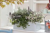 Light gray balcony box with herbs at the window