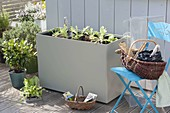 Kunststoffkasten mit Haube als Frühbeetkasten auf der Terrasse