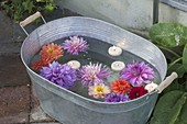 Zinc tub with Dahlia flowers and floating candles