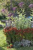 Perennial flowerbed with Helenium 'Rubinzwerg', Eupatorium purpureum
