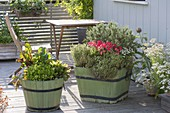 Green wooden buckets with vegetables and herbs