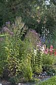 Perennial flowerbed with Verbena hastata 'Pink Spiers'