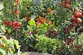 Vegetable patch with tomatoes (Lycopersicon), hot peppers, snack paprika