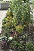 Mound vegetable bed with tomatoes, chillies, hot peppers