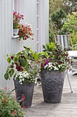 Tall gray bucket with peppers, hot peppers, Calibrachoa Celebration