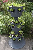 Salad tower made of recycled material Lechuza Cascada