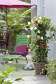 House plants and potted plants on balcony with red parasol