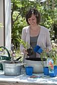 Woman planting mini-pond with Schizostylis coccinea