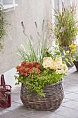 Autumn basket with Pennisetum 'Hameln' (Chinese pennisetum)