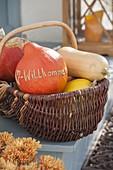 Basket of freshly harvested pumpkins, Hokkaido squash