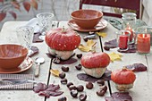 Autumn Table Decoration with Cucurbita (Turban Squash), Aesculus