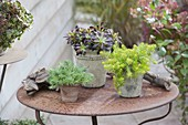 Easy-care succulent perennials on the terrace