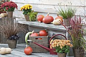 Autumn terrace with pumpkins (Cucurbita) on bench, chrysanthemum