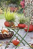 Hollow pumpkins, as planters
