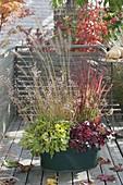 Green metal bucket autumnally planted-Pennisetum