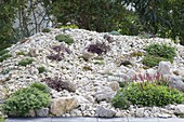 Rock garden of natural stone break before hedge, planted with rock garden perennials
