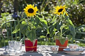 Table decoration with Helianthus annuus, pots with red felt