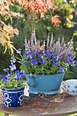 Enamelled kitchen sieve with Viola cornuta and Calluna Garden