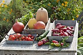 Freshly harvested peppers, tomatoes, zucchini
