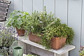 Herb box with rosemary and cascade thyme