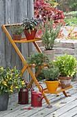 Orangene Pflanzentreppe mit Kräutern : Thymian (Thymus), Salbei