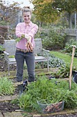 Woman is harvesting carrots in organic garden