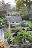 Harvesting white carrots in organic garden