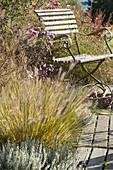 Pennisetum alopecuroides 'Hameln' (Federborstengras), Calluna Garden Girls