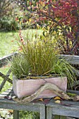 Box with three different Carex (sedges)