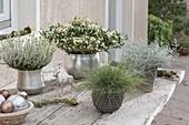 Silver-white table arrangement, Skimmia japonica 'Kew White'