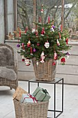 Small Nordmann fir colorfully decorated with balls and Santa Claus