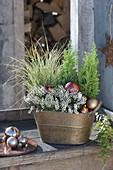 Copper Jardiniere Christmassy with Calluna Garden Girls 'Helena'