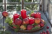 Schneller Adventskranz aus 4 roten Kerzen, Äpfeln (Malus) und Abies