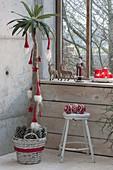 Pachypodium lamerei (Madagascar palm) decorated for Christmas