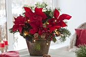 Christmas bouquet from Euphorbia pulcherrima, Abies