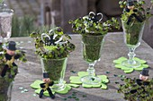 Oxalis deppei 'Iron Cross' (lucky clover) with moss in glasses