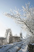 Snowy driveway, Carpinus hedge with archway