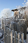 Fence on tool shed and plants covered with hoarfrost