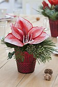 Small floral arrangement of Hippeastrum (Amaryllis)