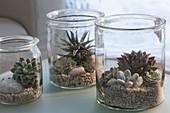 Succulents in preserving jars on gravel