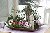 Small spring bed in the room-flat bowl with primula acaulis