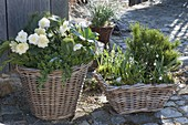 Baskets of hardy plants on a small terrace in the garden