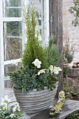 Winterproof planted bowl in front of greenhouse window