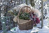 Winterly planted basket with Ilex (Holly), Heuchera