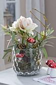 Hippeastrum (Amaryllis) ohne Erde im Glas mit Moos, dekoriert