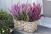 Basket with Erica gracilis (pottery) next to the house entrance