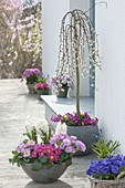 Gray shell with Hyacinthus 'White Pearl' and Primula