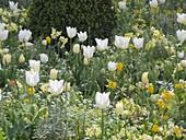 White-yellow spring in the Freising court garden