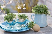 Cress seeded in eggshells and pitcher as an edible table decoration