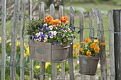 Wooden box and pot with spring planting at the garden fence